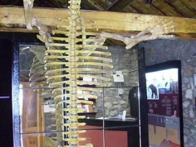 Museo del Oso; grupos senderismo madrid; senderismo madrid